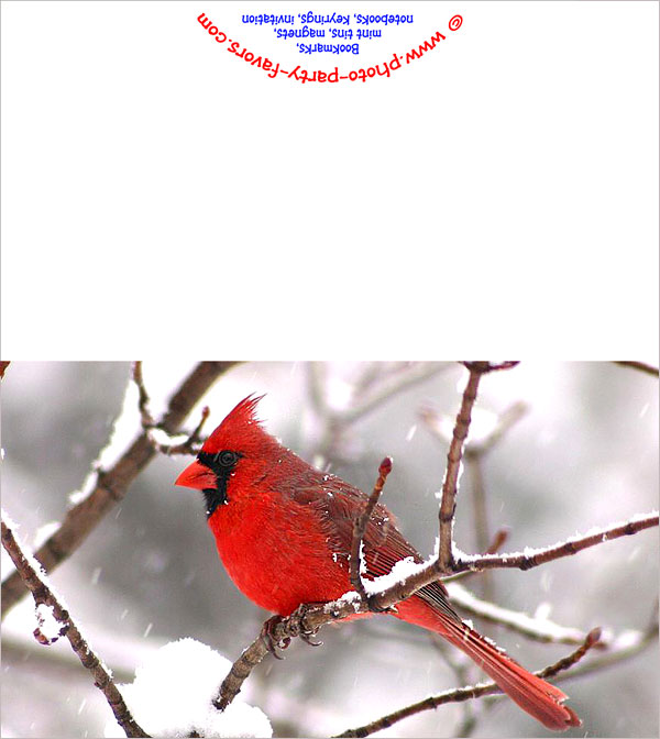 graphic regarding Free Printable Pictures of Cardinals called Totally free Printable Cardinal Take note Card - Against Image Occasion Favors